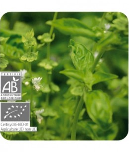 Pranarôm - Basilic exotique Bio Flacon compte gouttes - 10 ml