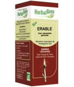Herbalgem Gemmobase - Erable bio Flacon compte gouttes - 50 ml