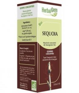 Herbalgem Gemmobase - Séquoia bio Flacon compte gouttes - 50 ml