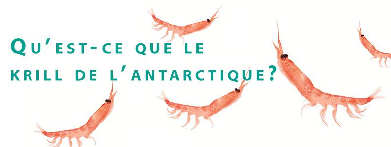 Quest-ce-que-le-krill-de-lantarctique