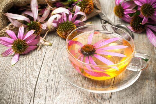 suc de plantes echinacae