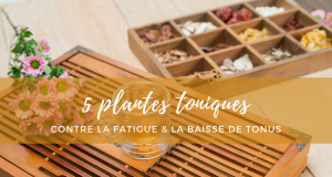 5_plantes_toniques_contre_la_fatigue
