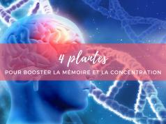 plantes_memoire_concentration